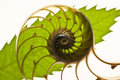 Split nautilus shell and leaf Stock Image