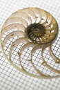 Split nautilus shell and leaf Royalty Free Stock Photo