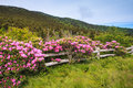 Split rail fence with rhododendrons near roan mountain state park at carver s gap in tennessee this stands out when the annual Stock Images