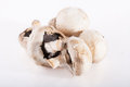 Spoiled rotten field mushrooms on a white background Royalty Free Stock Photography