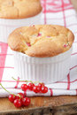 Sponge cake with red currant Royalty Free Stock Image