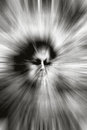 Spooky creature abstract scary face of ghost in black and white Royalty Free Stock Photo