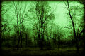 Spooky foggy woods leafless trees look in a green wooded area perfect for halloween supernatural look Stock Photography