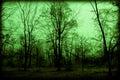 Photo : Spooky Foggy Woods
