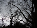 Spooky leafless branches