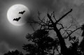 Spooky night sky cloudy full moon bats scene with a silhouette of trees and two black Stock Photo