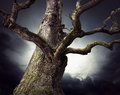 Spooky oak tree bare on dark sky in shades of blue and purple Stock Images