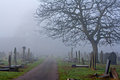 Spooky old cemetery on a foggy winter day Royalty Free Stock Photography