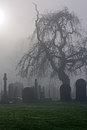 Spooky old cemetery on a foggy winters day Royalty Free Stock Images