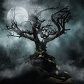 Spooky tree and moon dark foggy scenery with a full Royalty Free Stock Photography