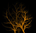 Spooky Trees Royalty Free Stock Photo