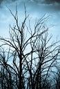 Spooky trees Royalty Free Stock Photo