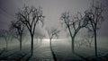 Trees and fog scene
