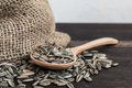 Spoonful of sunflower seeds and gunny bag on wood table Stock Images
