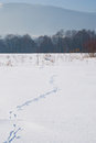 Spoor on snowy field with trees and mountains Stock Photography