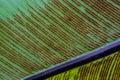 Spore of fern leaf in macro mode Stock Photo