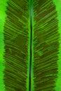 Spore of fern mature under leaf Stock Photos