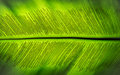 The spore of Green fern leaf Royalty Free Stock Photo