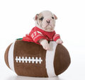 Sports hound Royalty Free Stock Photo