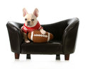 Sports hound french bulldog with stuffed football sitting on couch isolated on white background Stock Photography