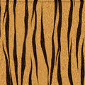 Spotted animal texture tiger fur of a Royalty Free Stock Image