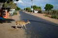 Spotted Deer Crossing The Road