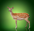 Spotty deer on green background Royalty Free Stock Image