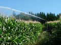 A sprayer spraying water in a cornfield photography Stock Photos