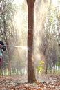 Spraying Fertilizer On The Stem.