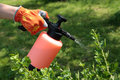 Spraying gooseberry bush against pests Stock Image