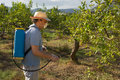 Spraying pesticide agricultural worker on fruit trees Stock Photo