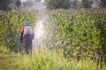 Spraying pesticide farmer on his field Stock Image