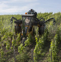 Spraying a vineyard with insecticide Stock Images