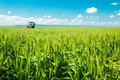Spraying wheat crops field, agricultural landscape. Royalty Free Stock Photo