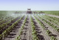 Spraying young cotton plants in a field crop sprayer the san joaquin valley california Stock Photos