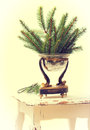Sprgs of pine sprigs christmas tree in antique vase with vintage filter effect Stock Photography