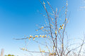 Sprig of blossoming willow against the blue sky in the spring for Easter. Royalty Free Stock Photo