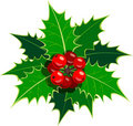 Sprig of European holly Royalty Free Stock Photography