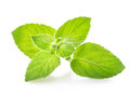 Sprig of mint on a white background Royalty Free Stock Image