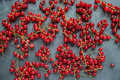 Sprigs of cranberries. sprigs of red currant on a gray backgroun Royalty Free Stock Photo