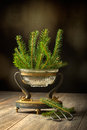 Sprigs of pine tree elegant antique vase full for christmas decoration Stock Image