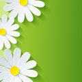 Spring abstract floral background d flower chamo with chamomile vector Royalty Free Stock Photo