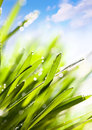 Spring abstract nature background Royalty Free Stock Photography