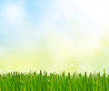 Spring abstract nature background Royalty Free Stock Photo