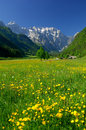 Spring in alpine valley Royalty Free Stock Photo