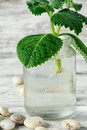 Spring appendage of lemongrass seedling plant takes root in glass jar with water Stock Photos