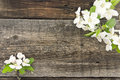 Spring apple tree blossom on rustic wooden background Royalty Free Stock Photo