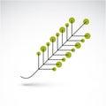 Spring ash leaf, botany and eco flat image. Vector illustration