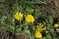 Spring awakening Royalty Free Stock Photo