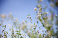 Spring awakening in the nature Royalty Free Stock Photo